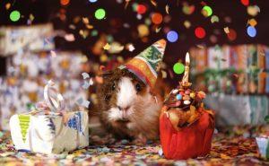 Gedanken zum ersten Geburtstag
